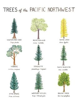 Trees of the Pacific NorthWest by Yardia