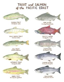 Trout and Salmon of the Pacific Coast by Yardia