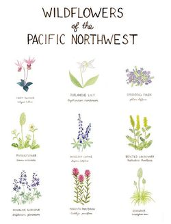 Wildflowers of the Pacific Northwest by Yardia